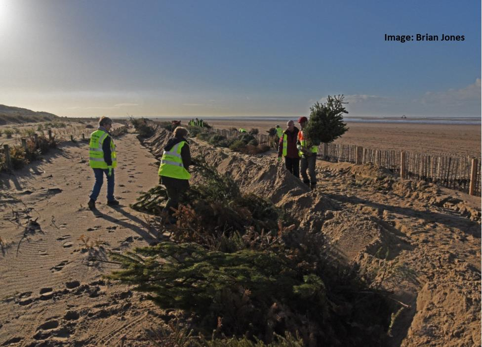 Christmas Trees and St Annes Sand Dunes